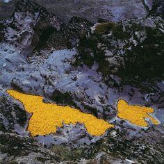 Andy Goldsworthy, Dandelions, 1993