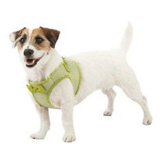 Get your pup St. Patrick's Day ready with our #MarthaStewartPets green striped harness. Only at #PetSmart.