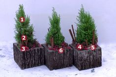 Container Plantings for Wintry Settings - FineGardening Christmas Planters, Christmas Wreaths, Christmas Decorations, Christmas Ornaments, Holiday Decor, Church Decorations, Winter Container Gardening, Fine Gardening, Container Plants