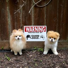 When they were dangerous.   42 Times Boo And Buddy Were The Cutest Dogs In The World In 2014