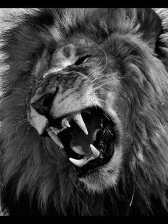 Hear Me Roar! #boom#leo#inspired