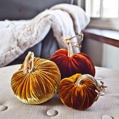 Autumn - Velvet Pumpkins