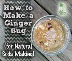 A ginger bug is a culture of beneficial bacteria made from ginger root and is the starter culture for many homemade fermented sodas and drinks.
