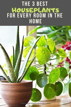 3 Best Houseplants For Every Room In The Home Besides adding interest to your home, indoor plants offer numerous health benefits.Besides adding interest to your home, indoor plants offer numerous health benefits.
