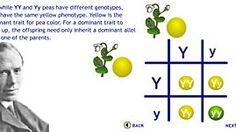 Mendel's Laws of Genetic Inheritance | Science | Classroom Resources | PBS Learning Media