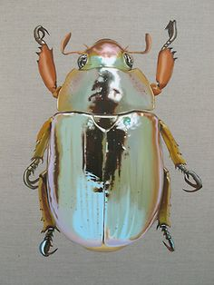 insect art - An entry from vilde kaniner Beetle Insect, Beetle Bug, Insect Art, Cool Insects, Bugs And Insects, Instalation Art, Cool Bugs, Beautiful Bugs, Beautiful Creatures