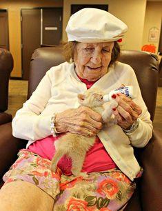 In diesem Altersheim umsorgt man verlassene Kätzchen