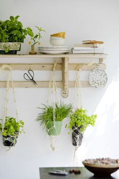 great idea for the kitchen. Hanging herbs under the shelf