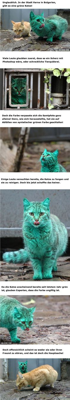 Grüne Katze ...........