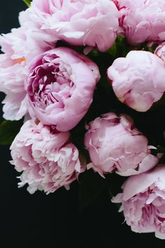I LOVE Peonies. So romantic and feminine. I'm going to grow them and have them all around the house and garden.