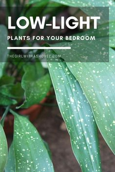 Do you have a dark bedroom?!?! Spice things up with these low light plants for the bedroom! Because even the darkest of spaces can grow the right plants! #plantlove #lowlighthouseplant NOT A LOT OF SUN IN YOUR ROOM? NO WORRIES WITH THESE HOUSEPLANTS! Low Light Houseplants | Indoor Plants for No Sun | Houseplants for Dark Apartments | Indoor Plants for the Bedroom | Best Indoor Plants, Cool Plants, House Plants Decor, Plant Decor, Pothos Vine, Cast Iron Plant, Apartment Plants, Low Light Plants, Bedroom Plants