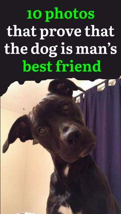 2 x 3 Dirty Dog Dug Garden Blame Cat Art Funny Dog Meme Fridge Toolbox Magnet