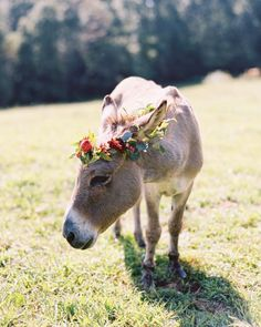 The resident donkey at this Marion, North Carolina, cattle ranch dressed up for the occasion, wearing his own ranunculus crown. Like Animals, Farm Animals, Wedding Crashers, Animal Party, Zebras, My Animal, Beautiful Creatures, Fur Babies, Your Pet