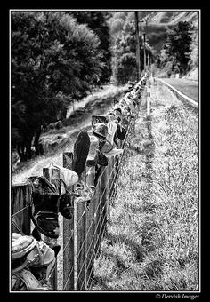 I spotted this odd Fenceline whilst on a trip between Raetihi and Wanganui on State Highway 4 in New Zealand. It was a bizzare which just begged to be shot. Book Publishing, Railroad Tracks, Couple Photos, Travel, Outdoor, Image, Couple Pics, Outdoors, Trips