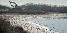 La restauración de las marismas para la adaptación al cambio climático - http://www.meteorologiaenred.com/la-restauracion-las-marismas-la-adaptacion-al-cambio-climatico.html