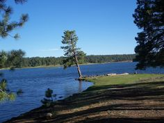 Pinetop, Az. I actually remember fishing here as a kid and thinking this tree was pretty cool.