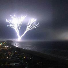Tree of light. Palm Beach, QLD, Australia. By Alice Robins.
