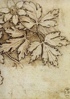 leonardo-da-vinci-drawing-flowers.jpg 1,239×1,754ピクセル