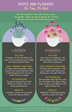 How To Grow Your Own Tea Turn your garden or windowsill into a mini tea plantation.