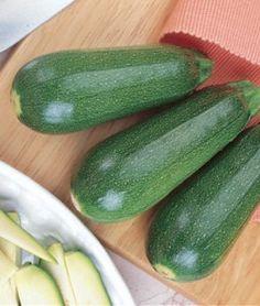 Squash Summer Sweet Zuke Zucchini Hybrid | Garden Seeds and Plants