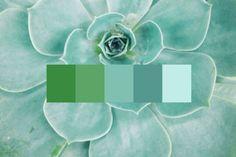 color palettes