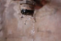 gotas de vida Fotografía: Mafe Rozo B Todos los derechos reservados © Copyright