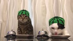 Cats wearing watermelon hats ring bells - YouTube