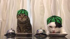Cats wearing watermelon hats ring bells - YouTube Ring Bell 0c4c29ecfa03