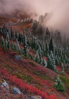 Transition | by Bryan Swan. Mount Rainier Nat'l. Park, WA.