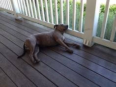 Lue on the Farmhouse Porch. All tired out from a long day of greeting guests.