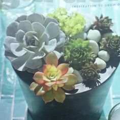 BHG/7/2012 issue Succulents that love sun are;echeveria, sempervivum ,and sedum. Tucked in white river rocks for cool contrast Page67