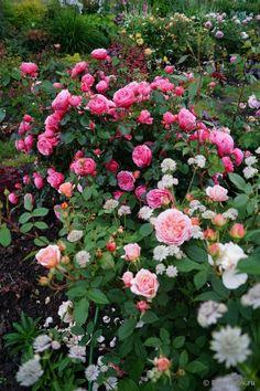сочетание цвета роз