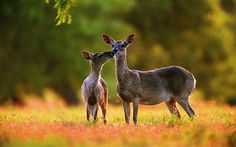 1920 x 1200 px pictures of deer  by Eduard Smith for: TrunkWeed