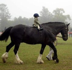 Big horse, tiny rider.  Leg cues might be an issue.... (*)