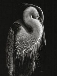 Lori Dunn Scratchboard Art - so detailed! Art Scratchboard, Beautiful Birds, Animals Beautiful, Animal Drawings, Art Drawings, Vogel Illustration, Art Blanc, Black Paper Drawing, Scratch Art