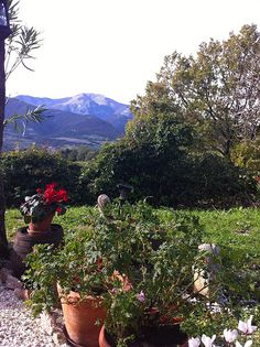 The garden of our Bed and Breakfast. Just outside the main door. Volti di Pietra - Marche - Italy