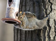Tips for Outwitting Squirrels for #Garden4Wildlife Month