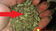 Jedniná surovina vyženia z vášho domu myši a ďalších škodcov!
