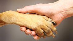 Lindas fotos.,.. 18 fatos que você não sabia sobre a pata do seu cachorro... Entenda seu amigão..