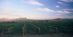 Meerlust Estate - Beautiful vineyards in Stellenbosch Great Shots, Wine Country, Vineyard Vines, South Africa, Wineries, World, Places, Outdoor, Beautiful