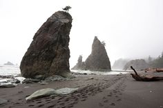 Olympic National Park, where Hempton staked out his One Square Inch of Silence,is, in his opinion, the last great quiet place in the United States. Its three distinct ecosystems—mountains, forests, and coast—make it one of the most sonically diverse environments anywhere, Hempton says. Though the damp weather can be a challenge, every part of the park can be easily accessed from U.S. Highway 101, which wraps around the Olympic Peninsula. >>