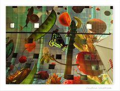 Atrapados por la imagen: Mercado de Rotterdam, en el interior..