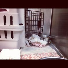 Teeny tiny #kitten