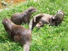 Imagini pentru delta dunarii imagini fauna Danube Delta, Travel Guides, Travel Destinations, Animals, Geography, Road Trip Destinations, Animales, Animaux, Animal Memes