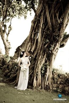 Guam Taotaomona Tree