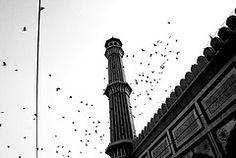 New Delhi, India. A little bit of Italy even in the mosque in Old Delhi…  … stormi d'uccelli neri / com' esuli pensieri / nel vespero migrar.