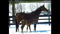 Havre De Grace and her War Front baby