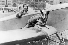 'Paradogs' Did Jumps With British WWII Battalion: http://mil-com.me/13ndo44