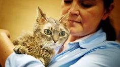AMAZING CAT SURVIVES BRAIN CANCER! SHE IS A MIRACLE!