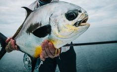 Pretty permit on the fly.